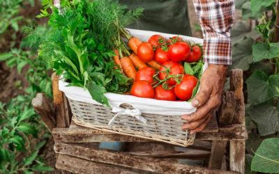 Agronegócios: tendências do segmento