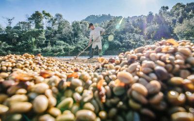 Café mineiro, negócio da semente à xícara