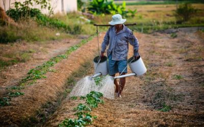 Agricultura familiar e empreendedorismo