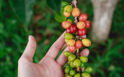 Café sustentável: uma possibilidade de inovação