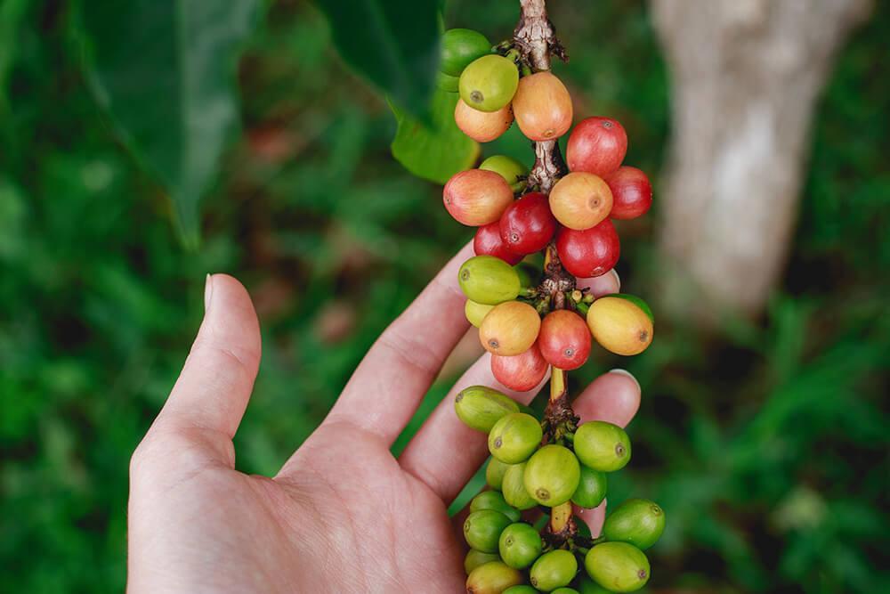 café sustentável